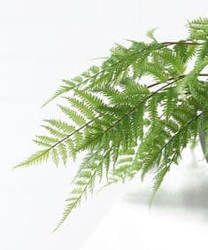 Large faux forest fern